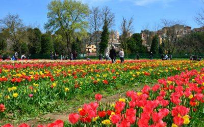 Roma riapre scegli il tuo parco dei tulipani